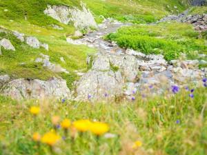 Nature Photo 03 by Studio Lazuli