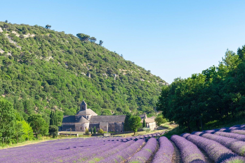 ラベンダー最盛期に撮影した真夏のセナンク修道院