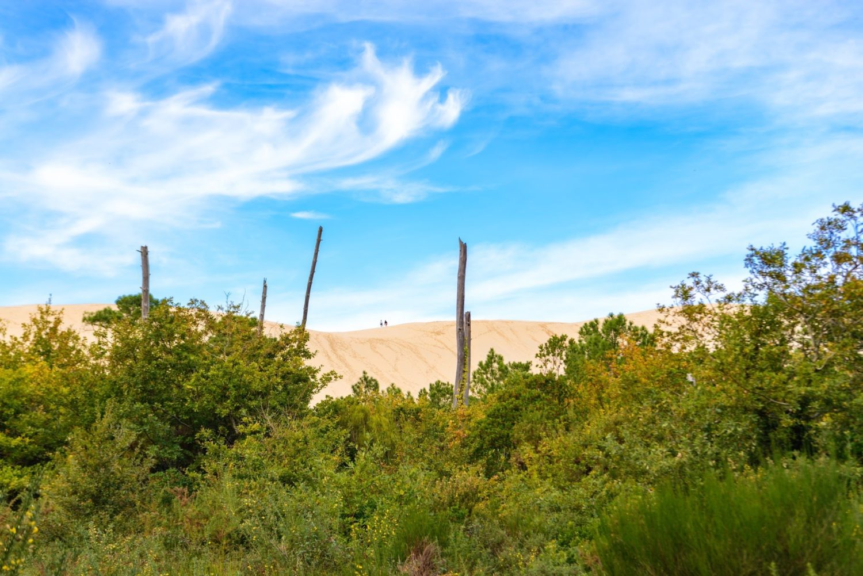 遠目から撮影したピラ砂丘